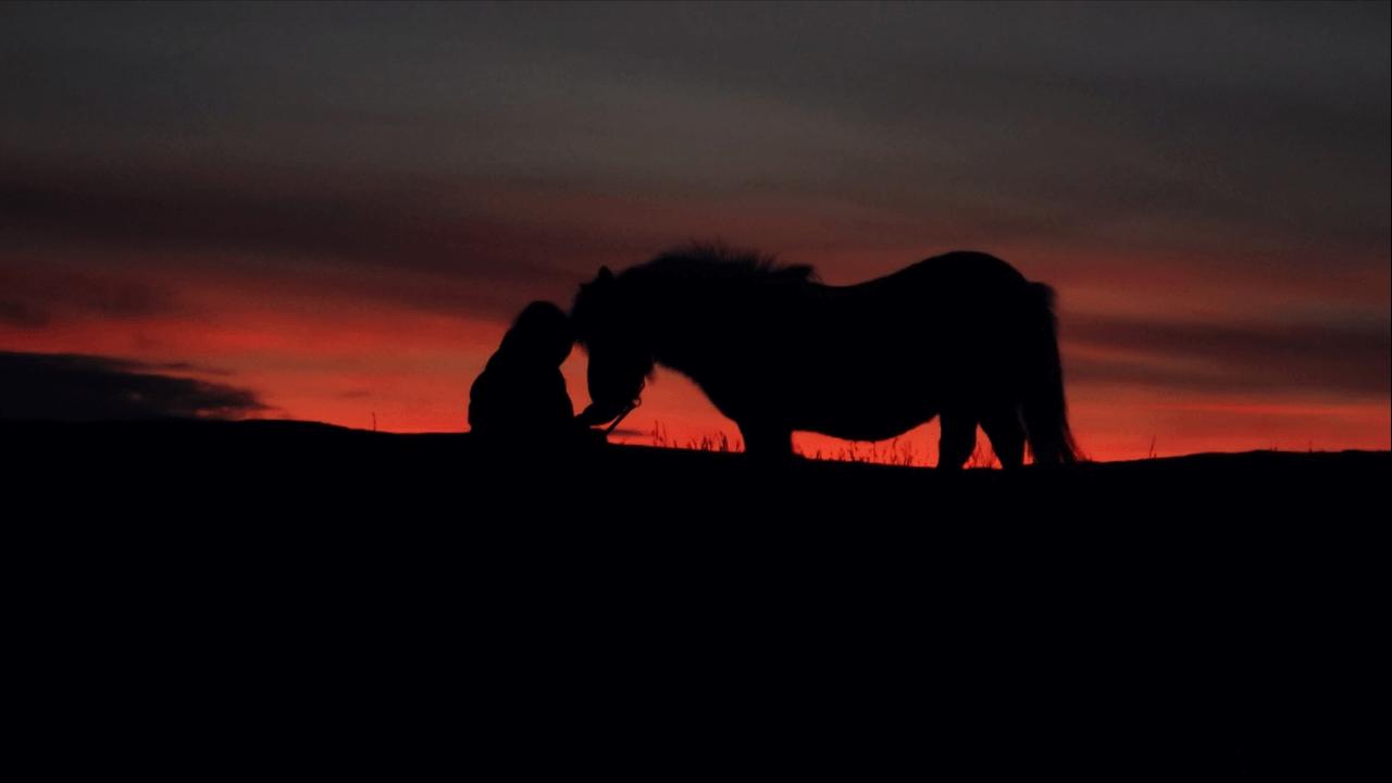 south-west-shetland-pony-group-sunset
